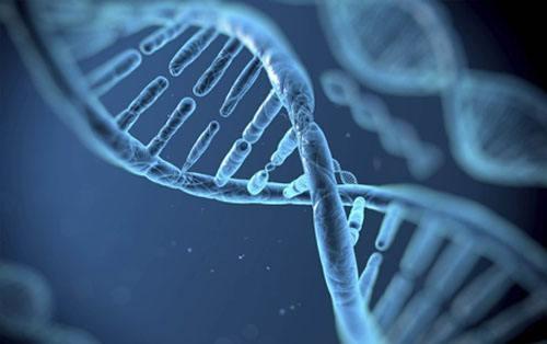 已知基因如何申请专利?
